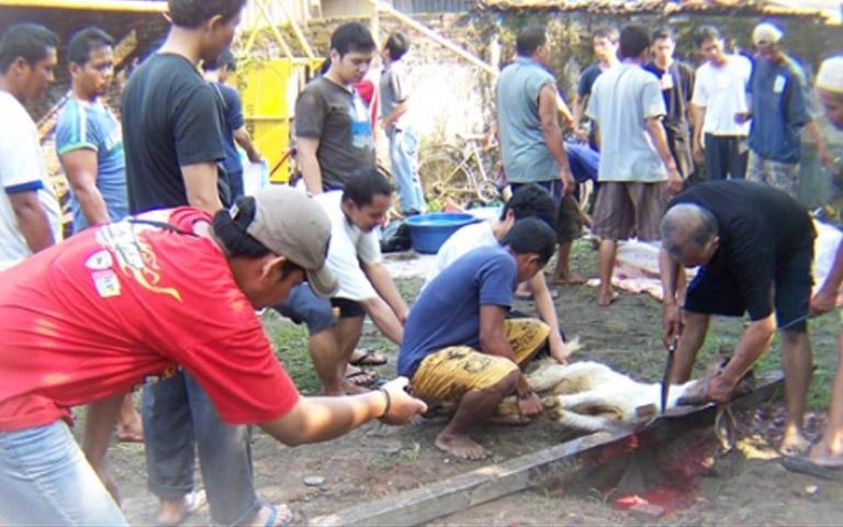 Penyembelihan hewan Qurban di Yayasan al Kahfi